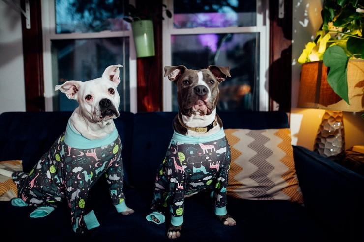 Две собаки в одежде