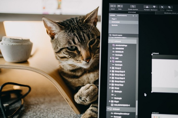 Котик с ноутбуком