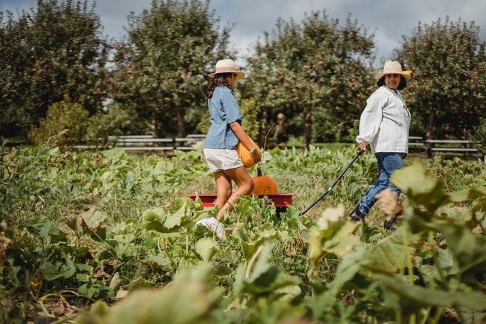 Девочка помогает по хозяйству в огороде
