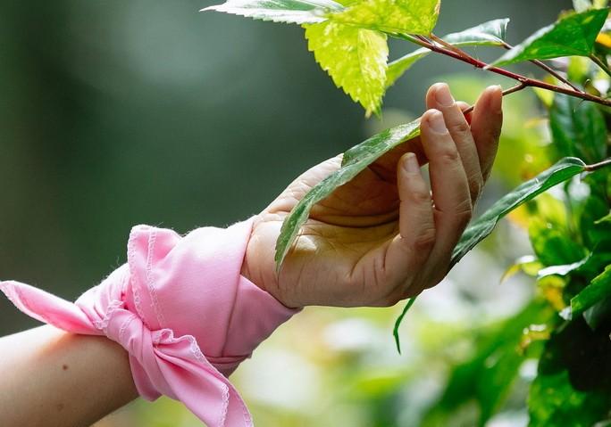 Рука держащая растение